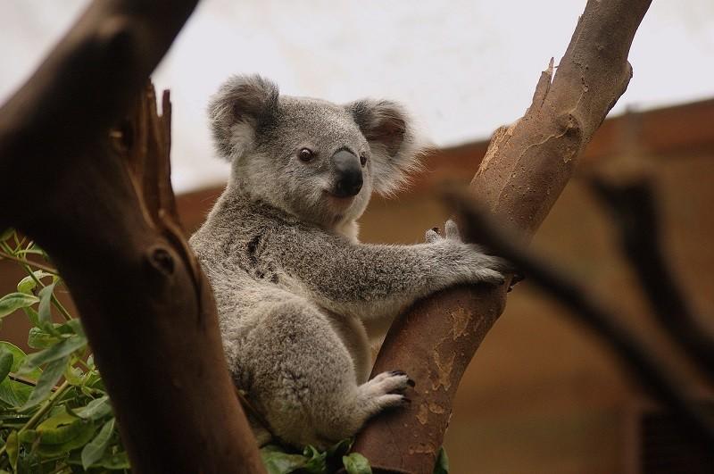 donde encontrar trabajo en australia