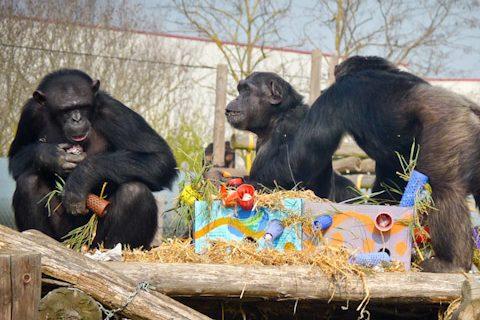 voluntariado espana primates fundacion mona