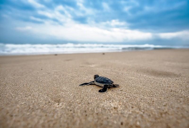voluntariado tortugas guatemala